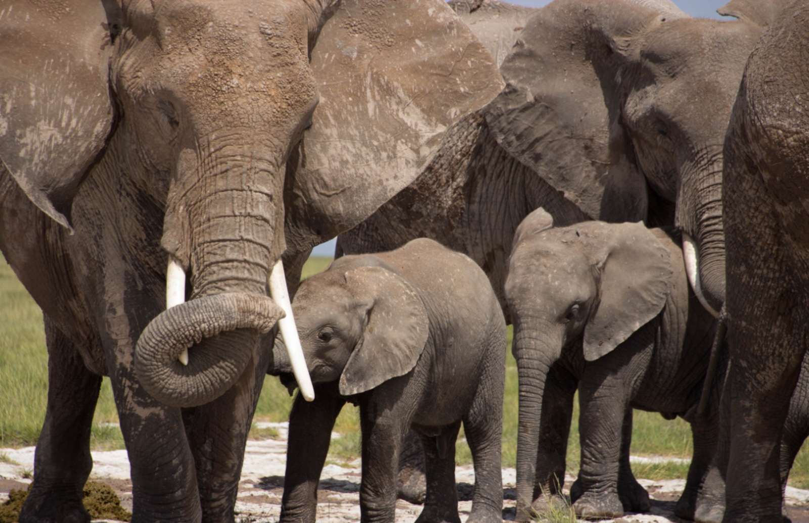 Protecting the elephant population against poaching and Ivory Trade